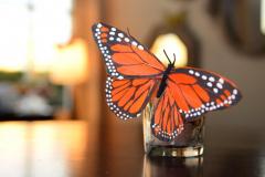 butterfly-blitz-3-016